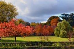 Autumn Landscape Royaltyfria Bilder