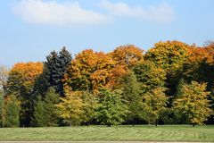Autumn landscape. Trees in the autumn, the blue sky Stock Image