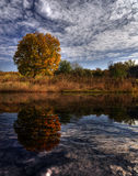 Autumn landscape. With orange tree and reflection stock photography