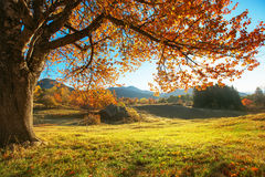 Free Autumn Landscape Royalty Free Stock Photos - 35078198