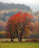 Autumn landscape Royalty Free Stock Photography