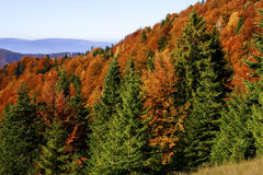 Autumn Landscape Lizenzfreies Stockfoto