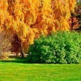 Autumn Landscape Fotos de archivo