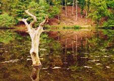 Autumn Landscape Fotos de archivo libres de regalías