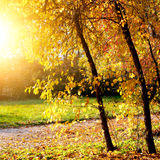 Autumn Landscape Stock Fotografie