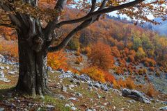 Autumn Landscape Stockbilder
