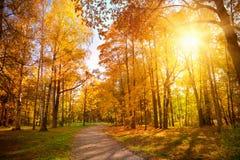 Autumn Landscape photos libres de droits
