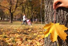 Autumn Landscape Imagenes de archivo