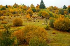 Autumn Landscape Imagens de Stock