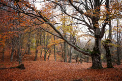 Autumn Landscape Images libres de droits