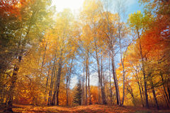 Autumn Landscape Imagem de Stock Royalty Free
