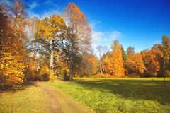Autumn Landscape Fotografia de Stock Royalty Free