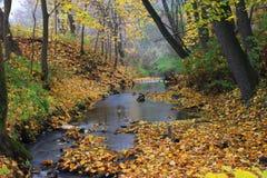Autumn Landscape Immagini Stock