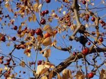 Autumn Landscape Images libres de droits