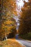 Autumn landscape. Autumn forest landscape with brown and orange foliage Stock Photography