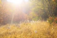Autumn Landscape Fotografia de Stock Royalty Free