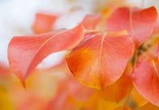 Autumn Landscape Fotos de Stock