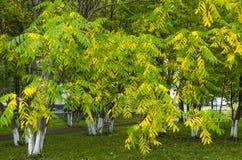 Autumn Landscape Imagen de archivo libre de regalías