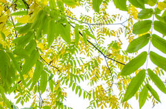 Autumn Landscape Foto de archivo