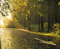 Autumn landscape. Sunset in autumn forest, with arrow on a road royalty free stock image