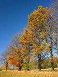 Autumn Landscape. Colourful trees Stock Image
