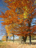 Autumn Landscape. Colourful trees Royalty Free Stock Photo