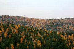 Autumn landscape. View on autumnal forest from apex of mountain Stock Image