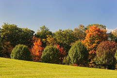 Autumn landscape. Autumn trees on the fringe of the forest Royalty Free Stock Photo