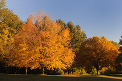 Autumn landscape. Autumn trees on the sunset Royalty Free Stock Images