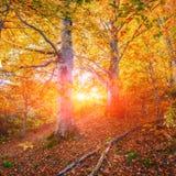 Autumn Landscape imagem de stock royalty free