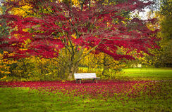 Autumn Landscape Photo libre de droits