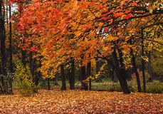 Autumn Landscape Imagen de archivo