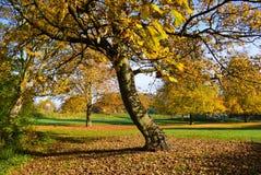 Autumn Landscape Lizenzfreies Stockbild
