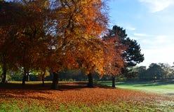 Autumn Landscape Stockfotografie