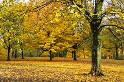 Autumn Landscape stockbild
