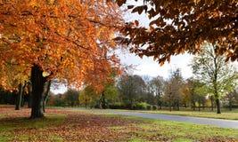 Autumn Landscape Image libre de droits