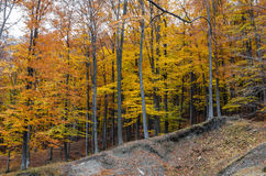 Autumn Landscape Photos libres de droits
