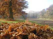 Autumn landscape. With fallen leaves Royalty Free Stock Photos