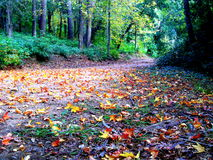 Autumn Landscape Fotografia Stock