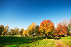 Autumn Landscape fotos de stock royalty free