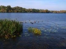 Autumn Landscape Royalty-vrije Stock Foto