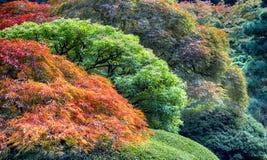 Autumn Landscape royalty-vrije stock fotografie