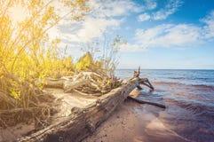 Autumn Landscape accrocs sur le rivage arénacé du lac photographie stock libre de droits