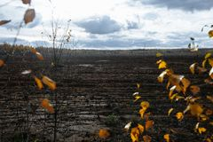 Autumn landscape. Afternoon, swamp and forest in the background. Latvia. Mud and muddy wet soil royalty free stock photography