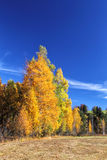 Autumn Landscape in Allg�u Stock Image