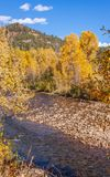 Autumn Landscape Along Delores River Colorado Arkivfoto