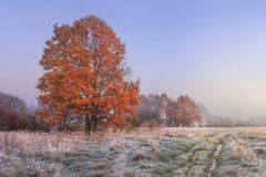 Free Autumn Landscape. Amazing Fall In November. Morning Autumnal Nature. Cold Meadow With Hoarfrost On Grass And Red Foliage On Trees Stock Photos - 122337703
