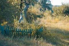 Autumn landscape. An ancient tree with a wooden fence. Autumn landscape. An ancient tree with a wooden fence Stock Photo