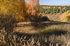 Autumn Landscape Arbres de bouleau et herbe sèche sur des collines au DA ensoleillé photographie stock libre de droits