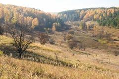 Autumn Landscape Arbres jaunes et herbe sèche sur des collines photos stock
